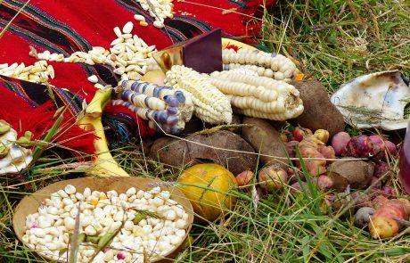 Cerimonia in omaggio alla Pachamama (Madre Terra) a cui vengono offerti i frutti della terra. Provincia di Azuay, Ecuador.