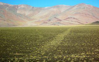 Le vigogne dell'Inca, San Juan, Argentina.